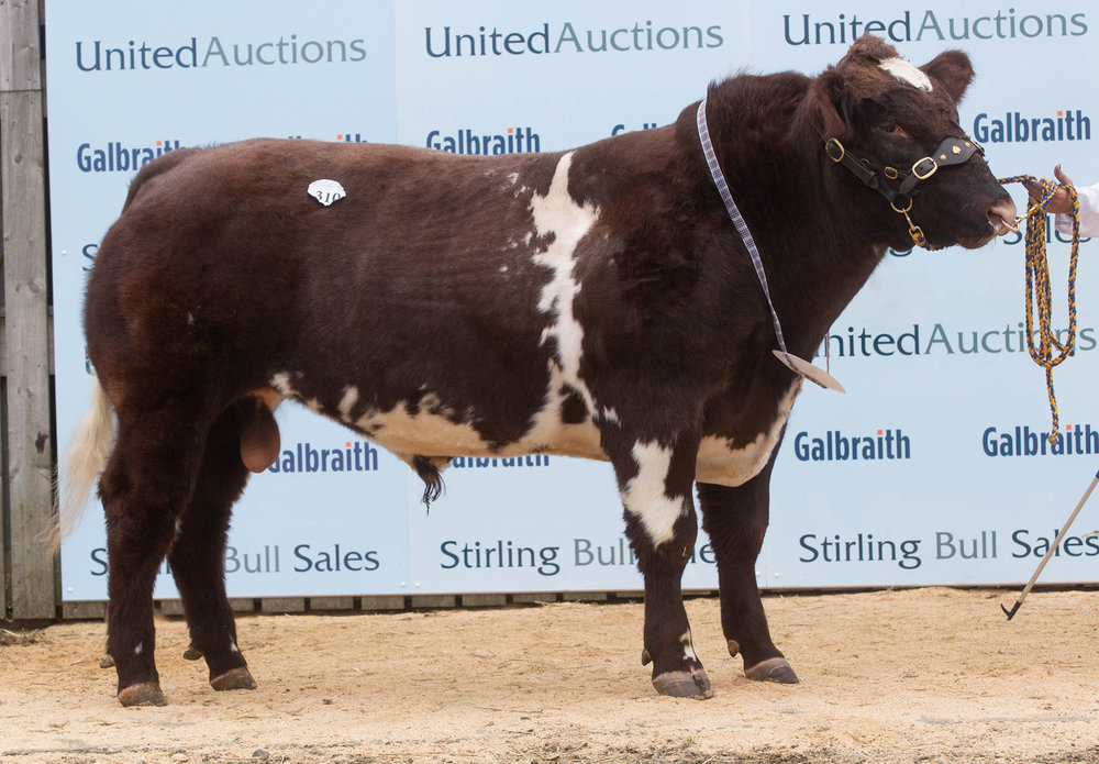 Stirling Bull Sale - October