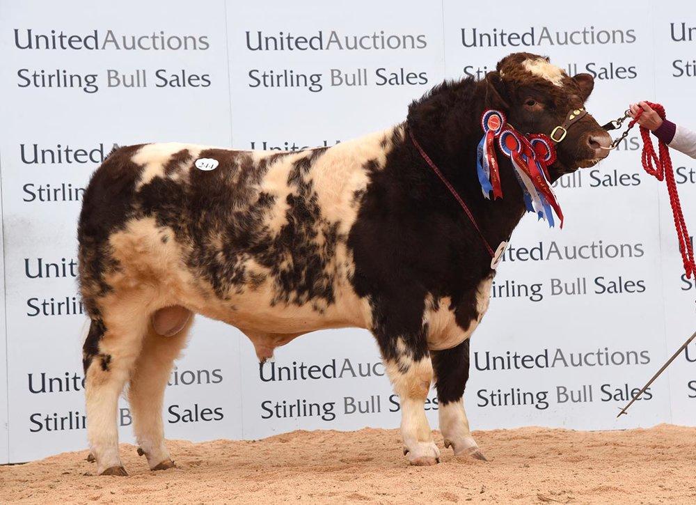 Stirling Bull Sale - February