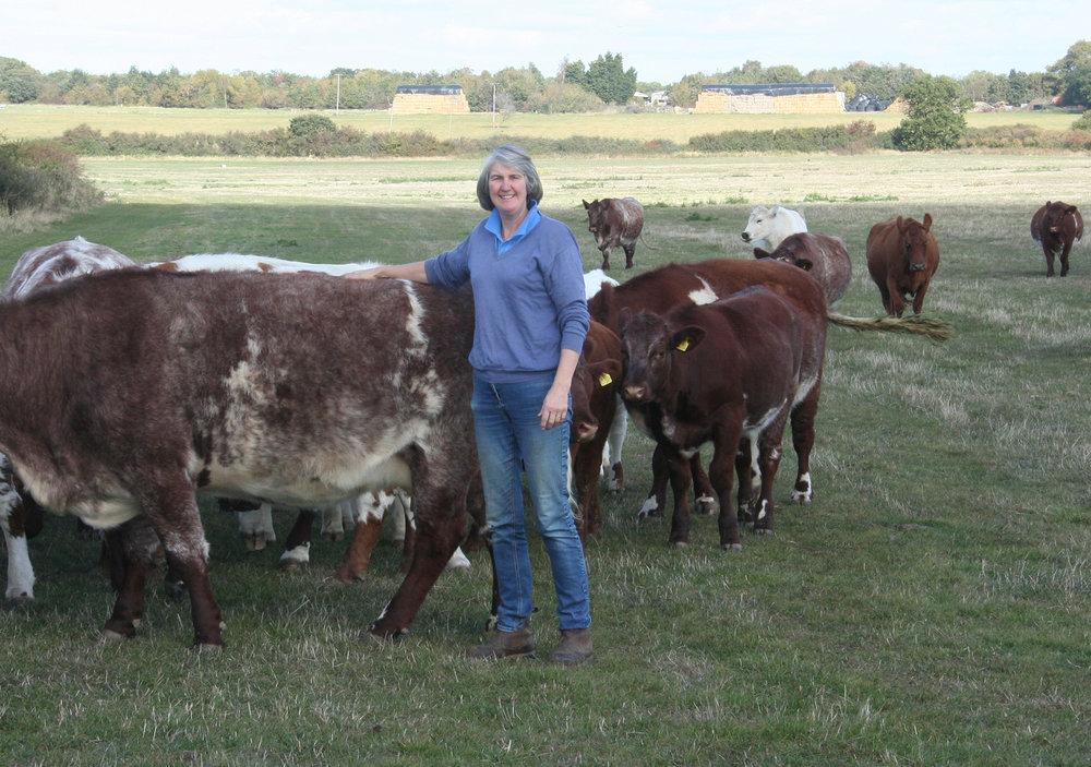 Vivien St Joseph, Tollesbury herd