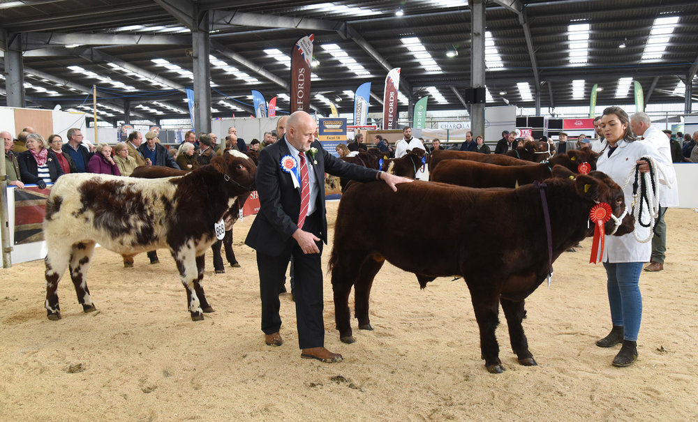 Agri-Expo Calf Show 2018