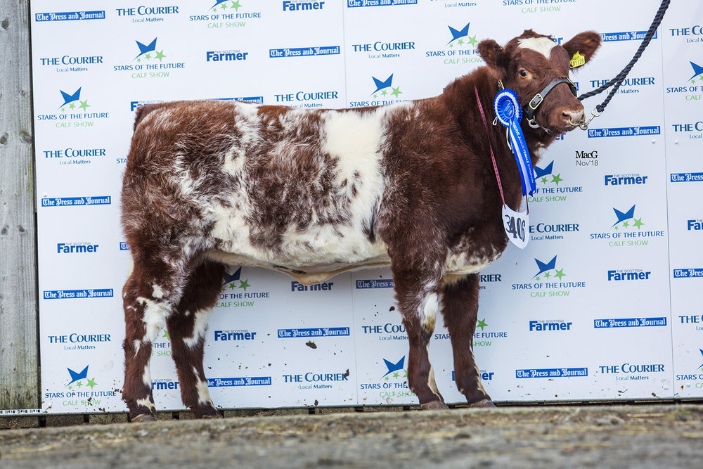 Stars of the Future Calf Show 2018