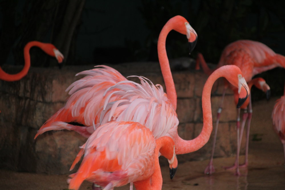 0- SW - Flamingos at night.JPG