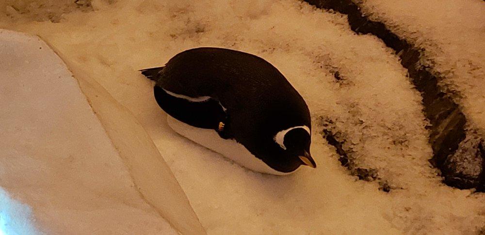0 - SW - lone penguin.jpg