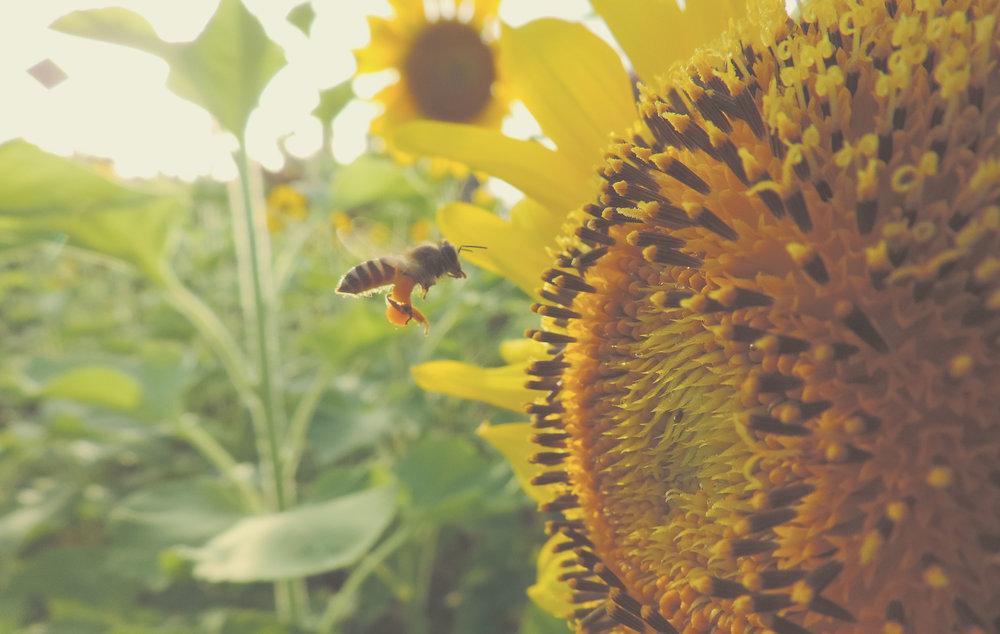 Außengestaltung - Die Begrünung und neue Bepflasterung wird ein weiteres Aushängeschild des Bienenhofes. Wir planen einen Bienen-Lehrpfad und große Grünflächen für ein wohliges Zuhause für unsere Bienenvölker und als eine Attraktion für Besucher - egal ob jung oder alt. Wir suchen einen Partner für die Umsetzung und Planung.