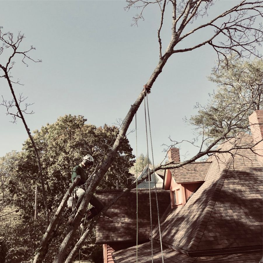 It's better to prevent the accidents in the first place than to have to clean them up. - We don't want you to lose any sleep over that limb that's hanging over your house. Our expert pruning technics can prevent potential damage, and promote healthy future growth. With correctly made reductions cuts, removal cuts, and proper crown cleaning, thinning, canopy raising, and weight reduction we can help promote a healthy relationship between your property and your trees, as we like to call it - Creative Arboriculture.
