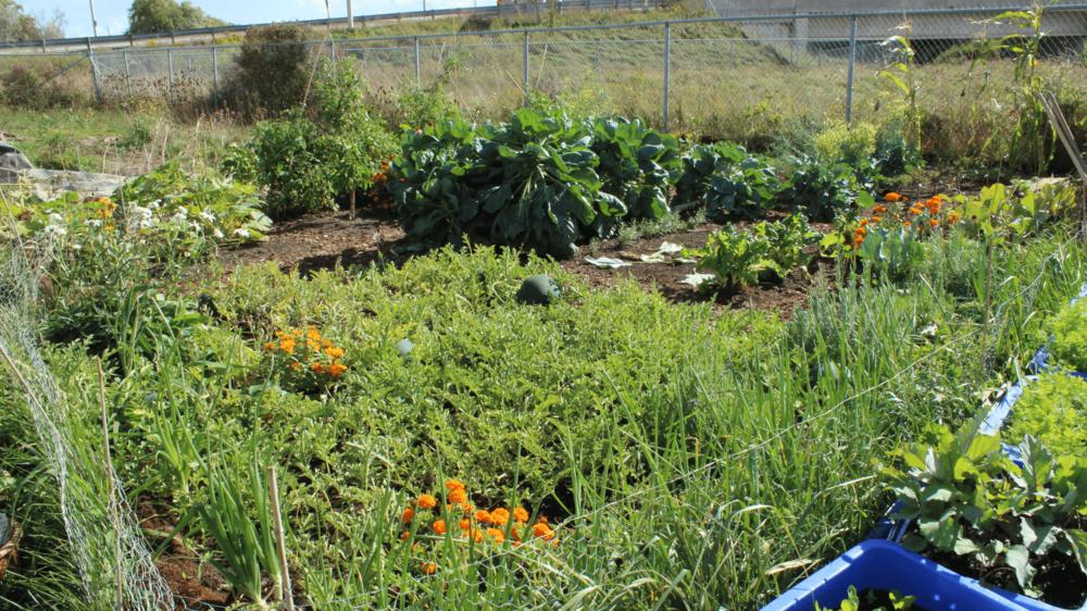 NO-TILL BED - With a no-till garden more soil, compost,