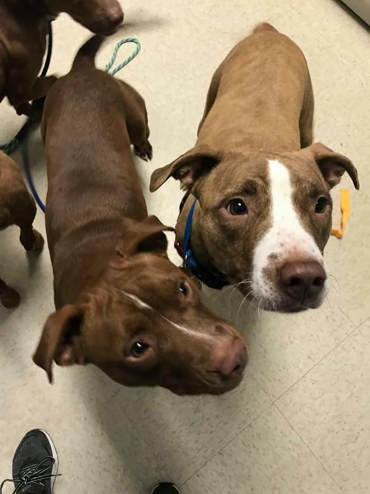 save-ohio-pets-2018-Jan-1.jpg