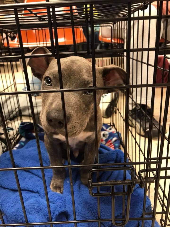 save-ohio-pets-2018-Feb-4.jpg