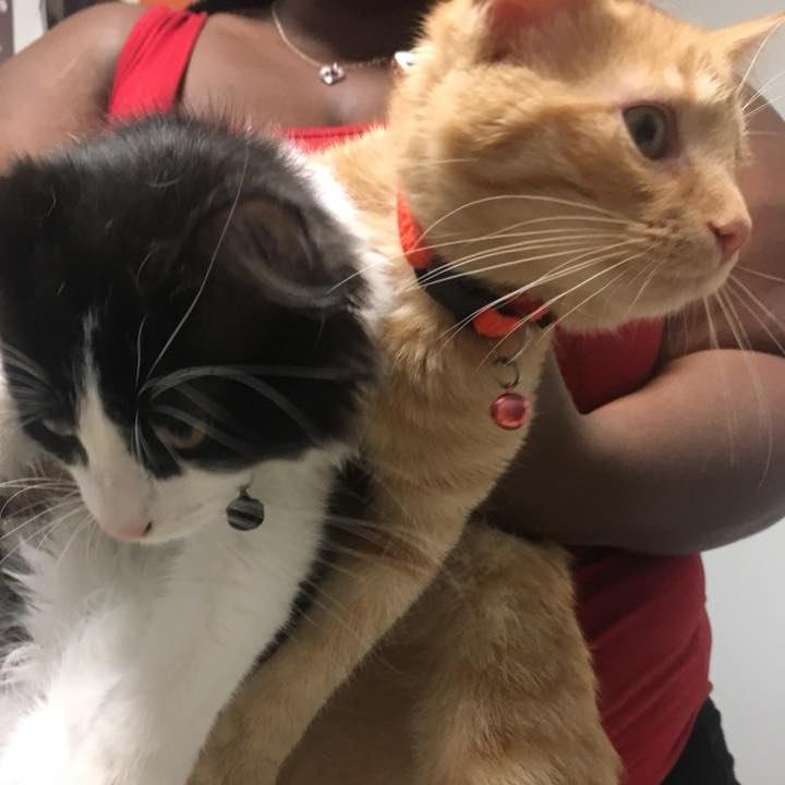 save-ohio-pets-2018-June-6.jpg