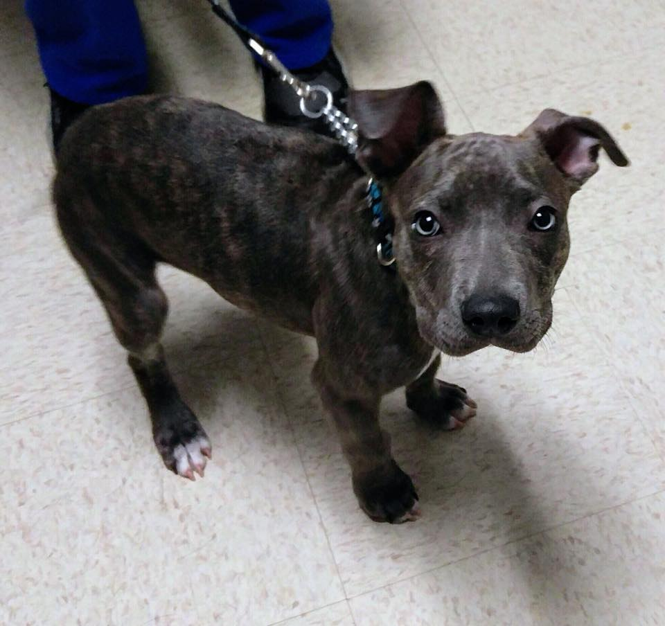 save-ohio-pets-2018-March-16.jpg