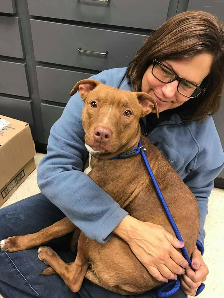 save-ohio-pets-2018-Jan-9.jpg
