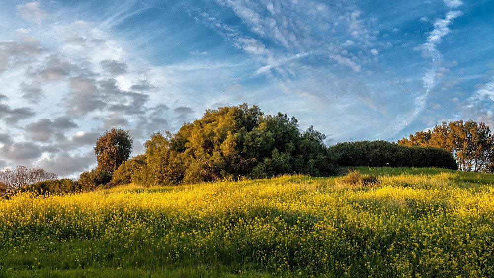Summerland_Spring%%Pri%%Ken_Pfeiffer.jpg