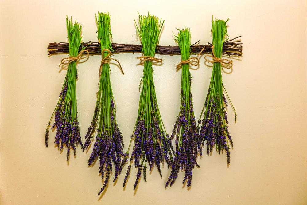 lavender detail.jpg