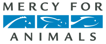Mercy For Animals is an international animal protection charity dedicated to preventing cruelty to farmed animals and promoting compassionate food choices and policies. Founded in 1999, MFA is the world's leading nonprofit focused exclusively on ending factory farming.  Learn More --->