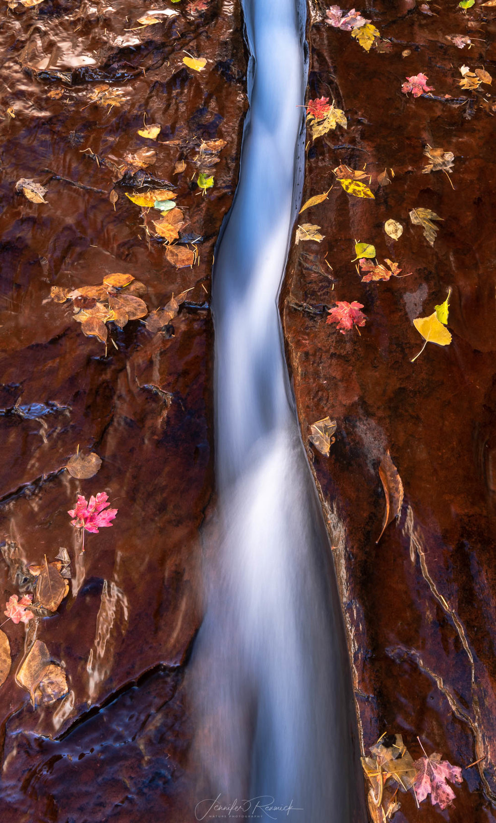 Autumn Fissure / Jennifer Renwick / Autumn leaves border a crack with rushing water