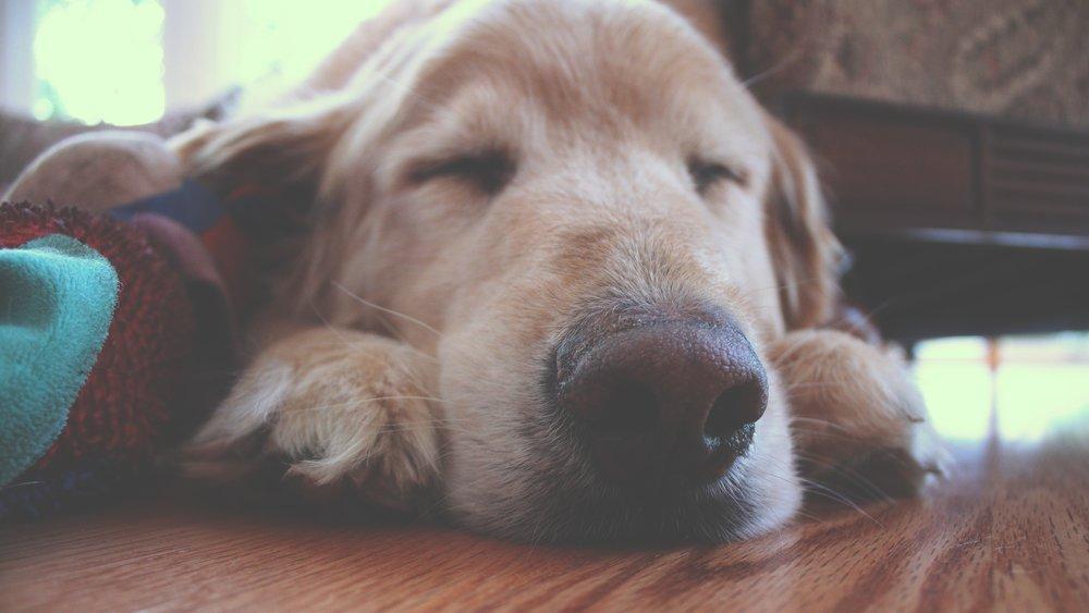 animal-canine-cute-144640.jpg