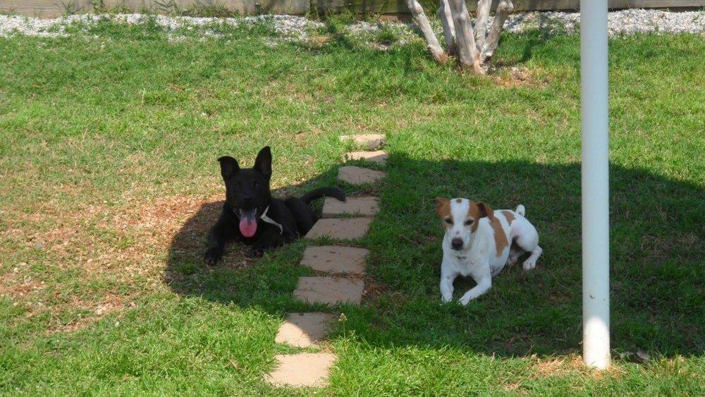 DogsRelaxing1-1024x576.jpg