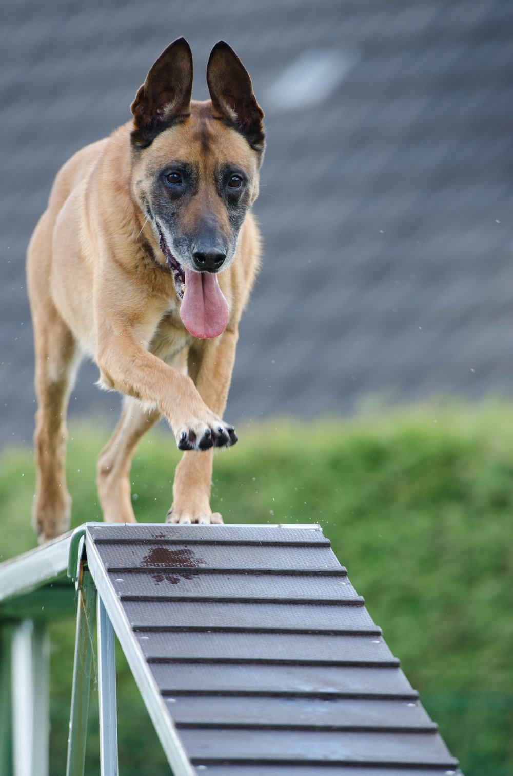 agility-animal-blur-260440.jpg