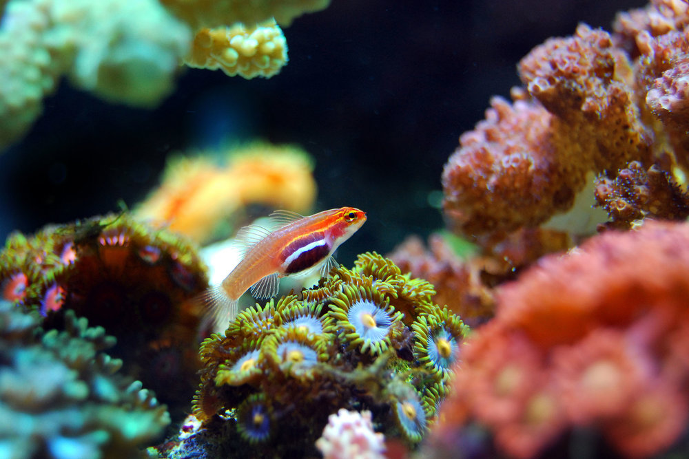 Principle #5 - The ocean supports a great diversity of life and ecosystems.