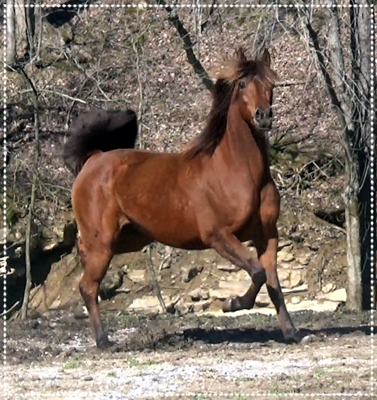 CGR Errosa In Motion, 2007 Arabian Mare - A dtr of the great Baske Afire with a pedigree full of Polish superstars. Proven broodmare. Sells in foal to Marco Ali by the great QR Marq. 2 in 1 package deal. Due April 2019. Her foals have great looks and temperaments.