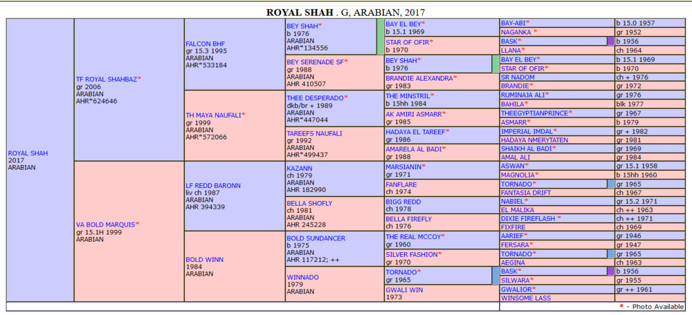 Royal Shah extended pedigree.png