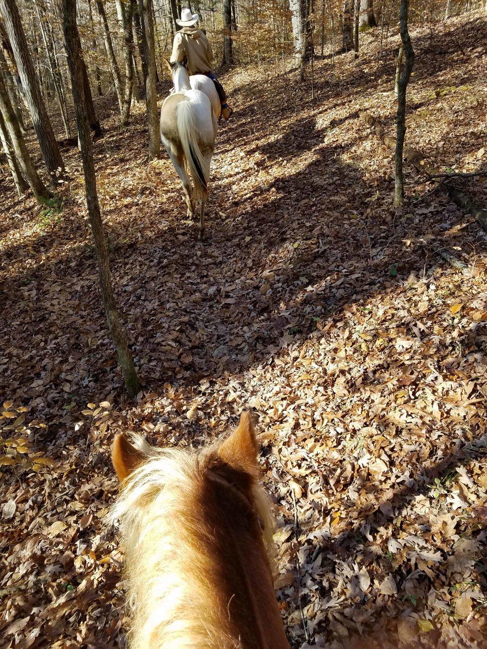 Willie trails 4.jpg
