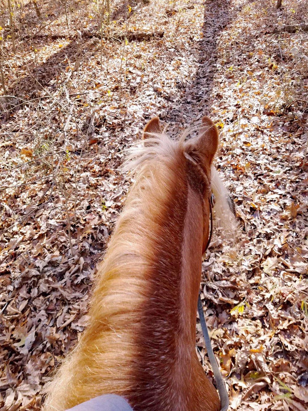 Willie trails 2.jpg