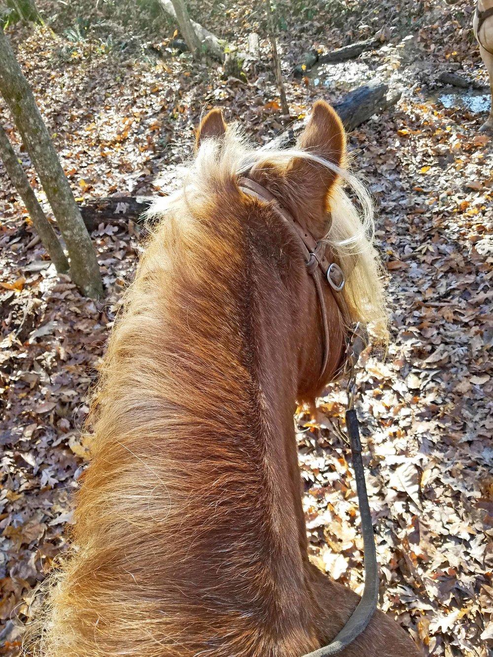 Willie trails 1.jpg