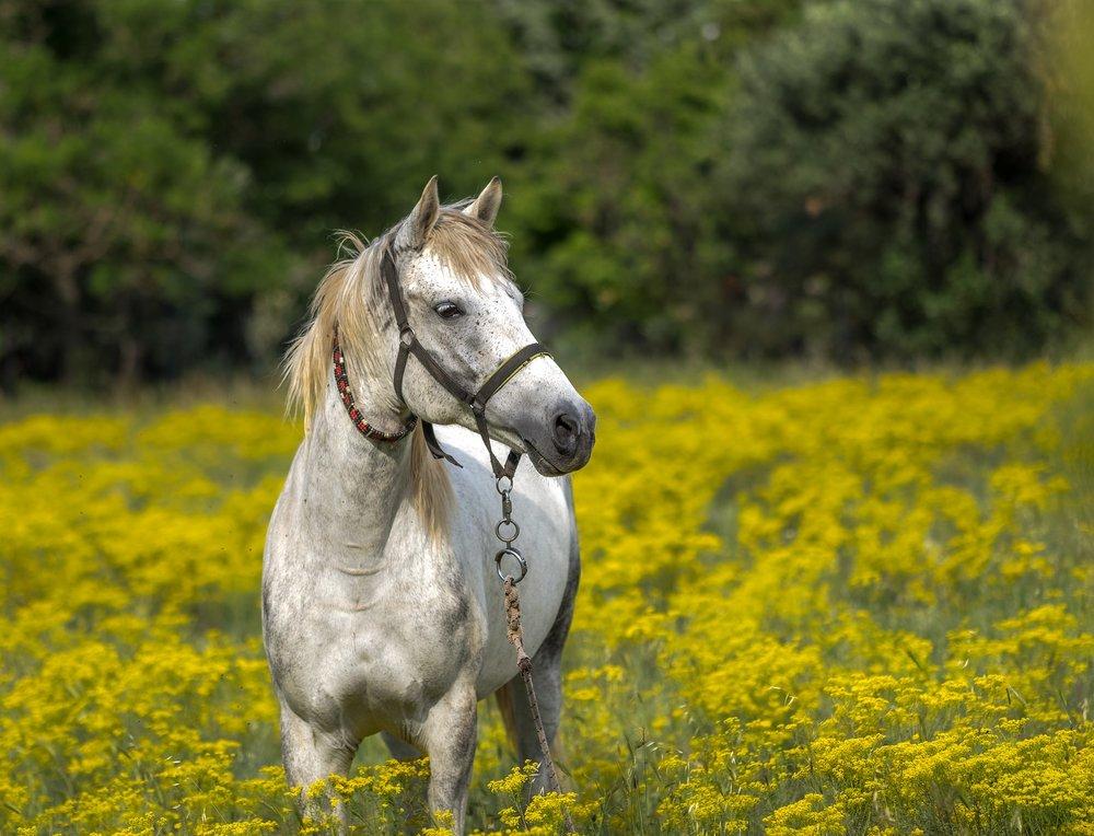 horse-3419146_1920.jpg