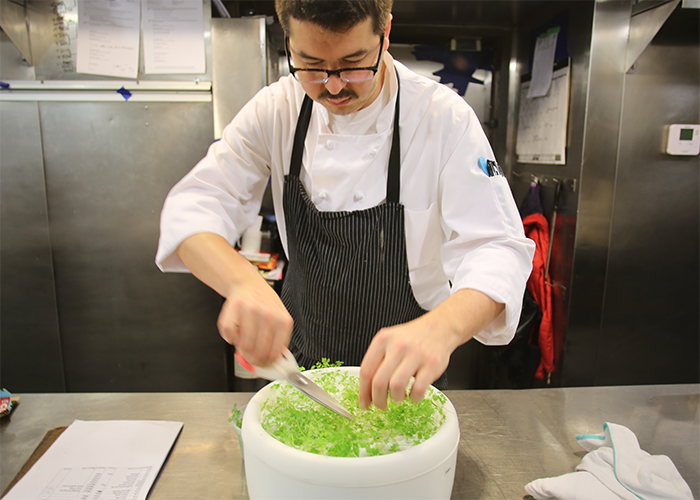 Chef Ben Weisberger harvesting fresh chervil at No.9 Park.