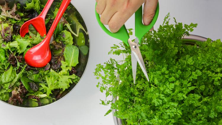 salads1.jpg