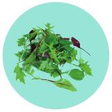 Spring Salad Blend