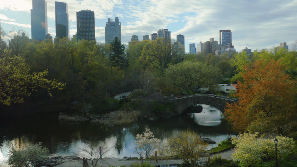 negotiating-with-nature-central-park.png