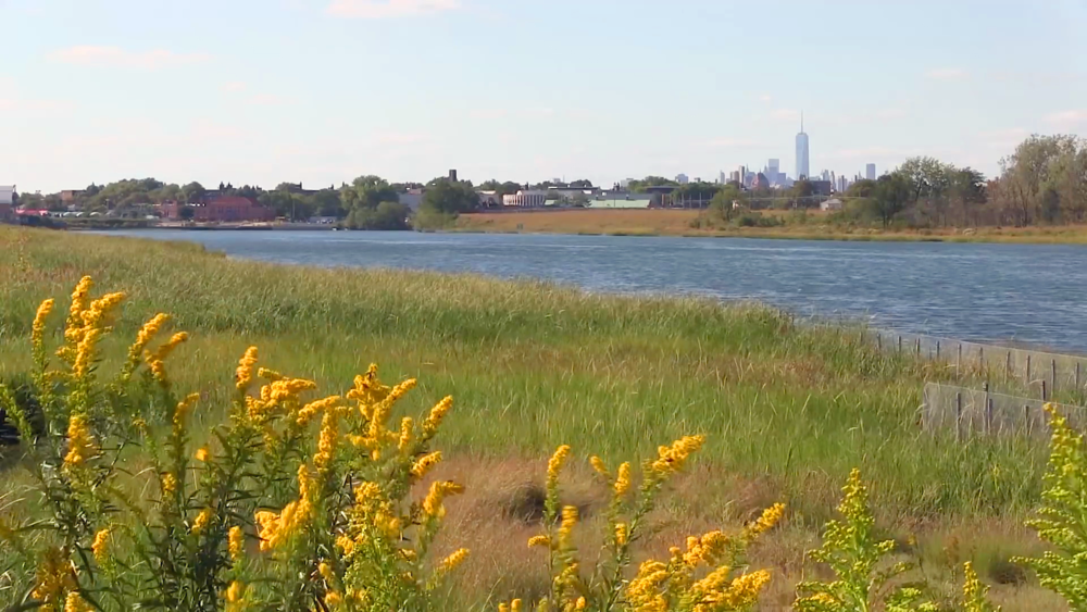 negotiating-with-nature-nyc-wetlands.png