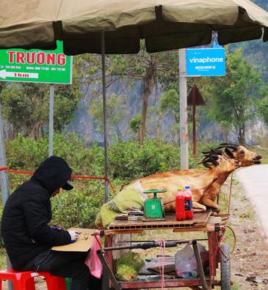 Strange lifelike roasted goat for sale.