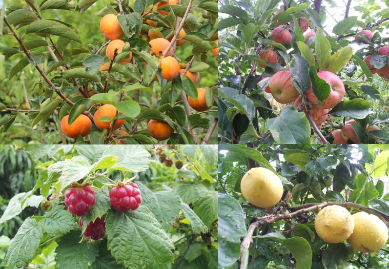 Food forest fruits