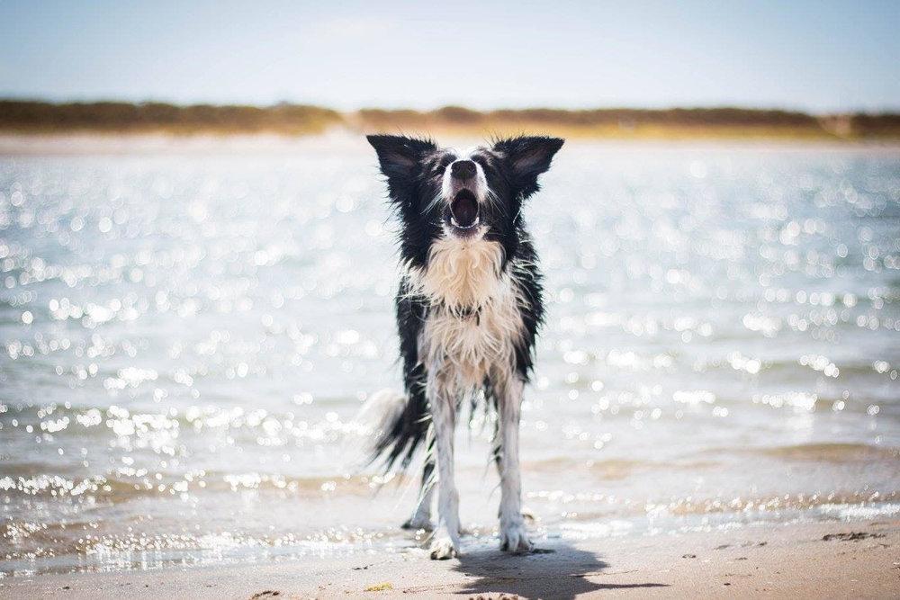 VIBE DOG TRAINING