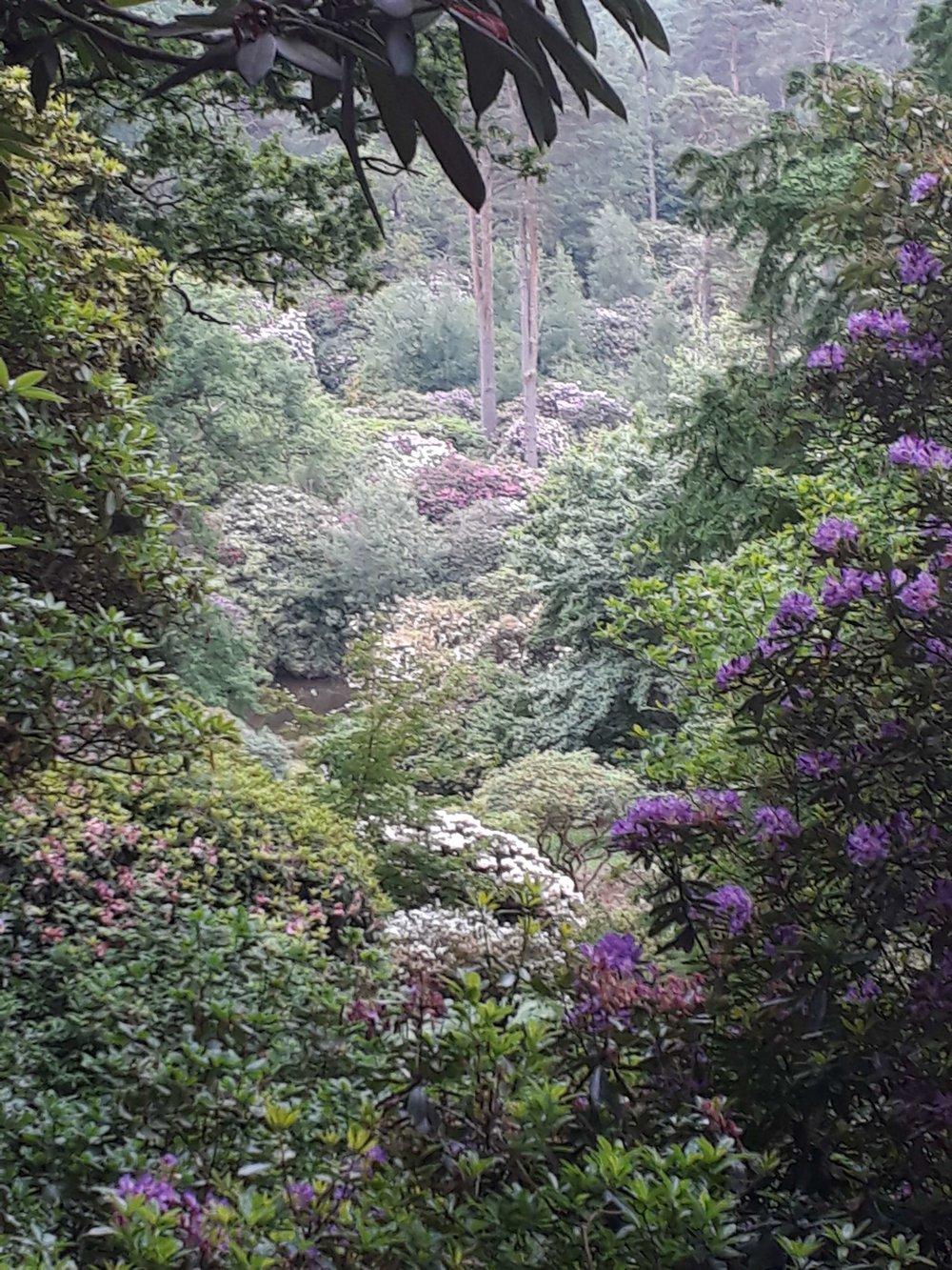 Rhododendron valley.jpg