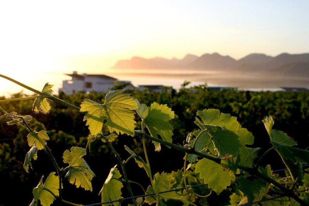The Benguela Cove Lagoon Wine Estate in South Africa