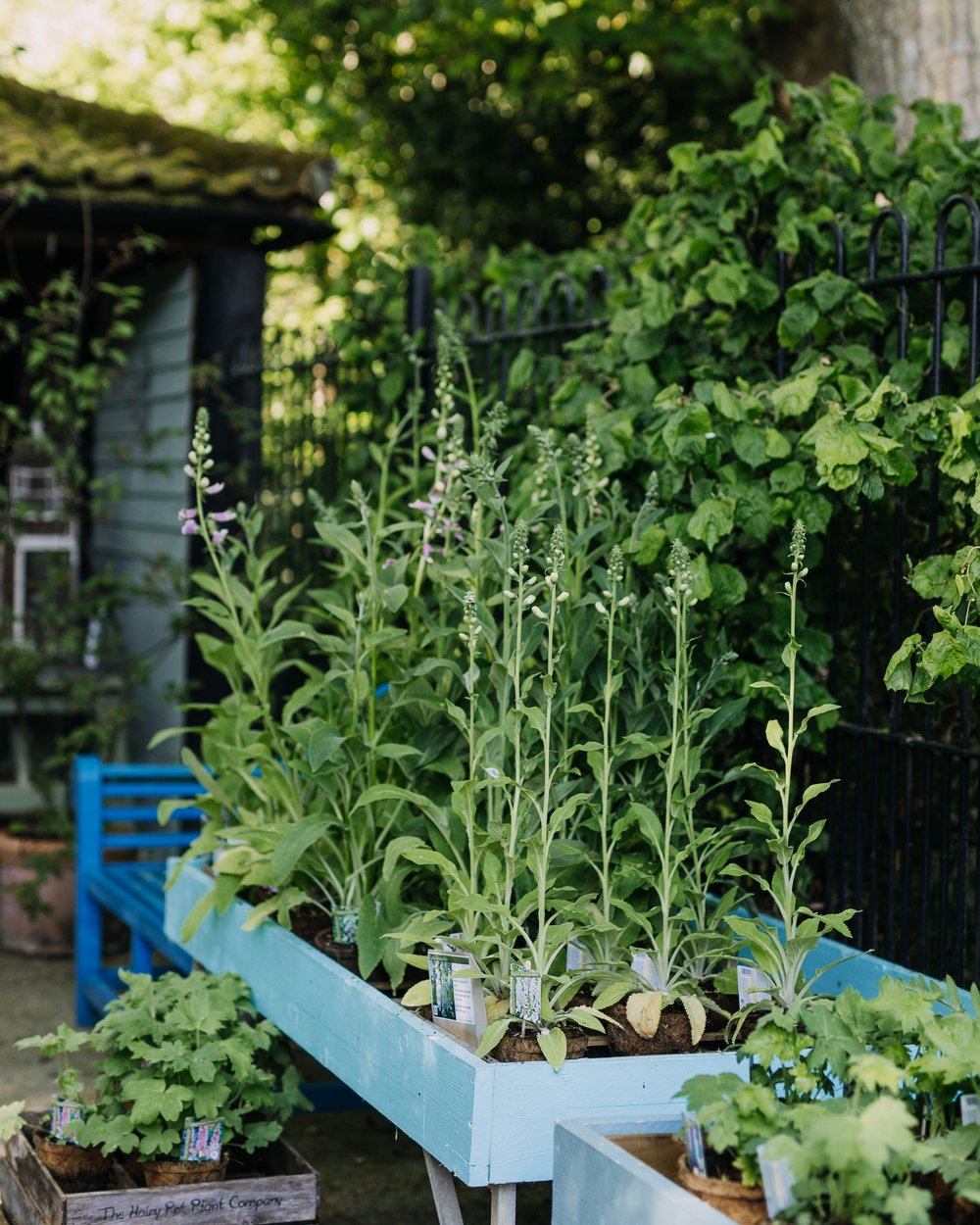 A year in your garden from our garden designer for horticultural therapy & wellbeing