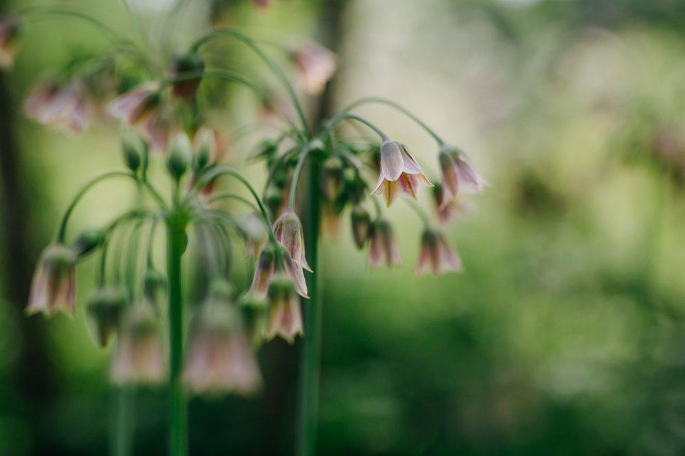 Garden design consultancy, planting design in Oxfordshire, Berkshire, Buckinghamshire & London