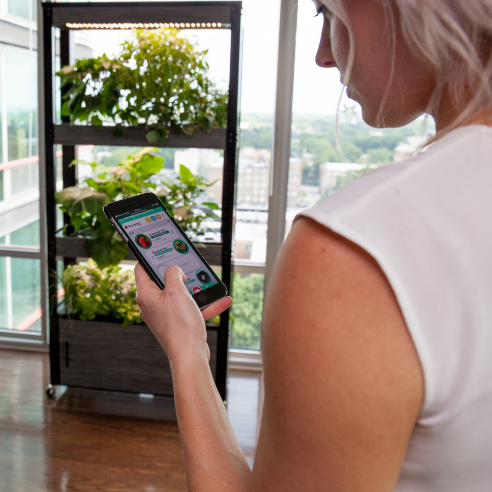 #TheAppRemembers - Your garden's progress is tracked by our integrated system, which will also remind you every time your plants need you.