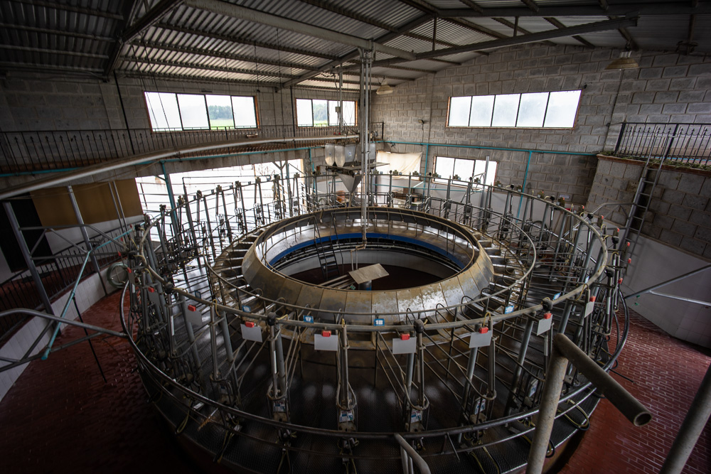 The cow milking facility, Rancho La Hondonada, Queretaro, Mexico