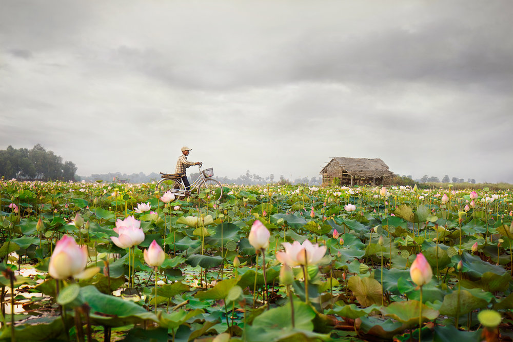 Sense of Place Category  : Lotus Farm in Cambodia