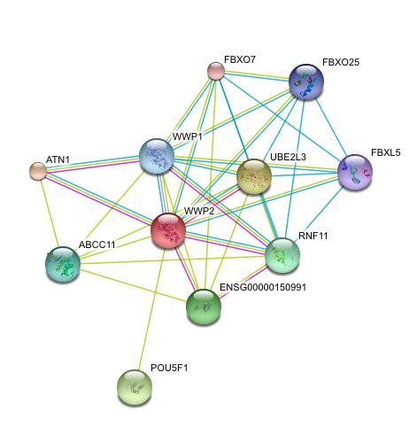metastasis-network