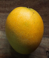 Golden Glow - Golden glow is a delicious selection from Kihei, Maui that bears regularly in May through June. The 20 to 24 ounce fruit has very little fiber, a thin seed and great flavor. It grows medium sized and is best suited for dry places only.