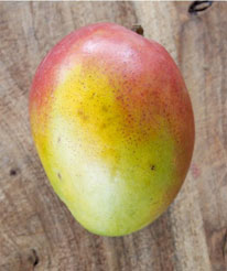 Pope - Pope is a medium size tree that is a regular, heavy bearer of high quality fruit. The yellow skinned, red blushed fruits are ripe in July and August and average 10 to 18 ounces. Trees fruit best in dry areas.