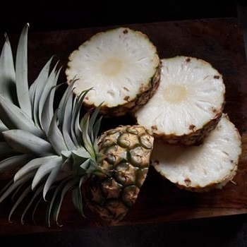 Pineapple - 'Sugarloaf', a sweet white Pineapple has melting white flesh, and a soft edible core. They are extremely sweet and rich in flavor. Pineapples are easy to grow and harvest. The fruit is ripe in August and September.