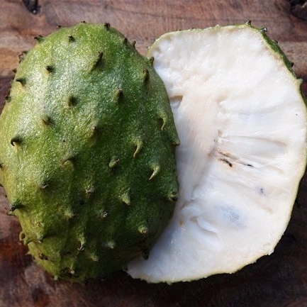 Soursop - The fruit, contrary to its name, is sweet and can be stringy. It is eaten fresh or chilled and is often made into candy, sorbet or juice. The small tree bears the large fruit directly on the trunk and large branches, and grow best below 1,000 feet in high humidity climates.