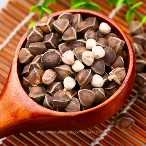 moringa-seeds-pic.png